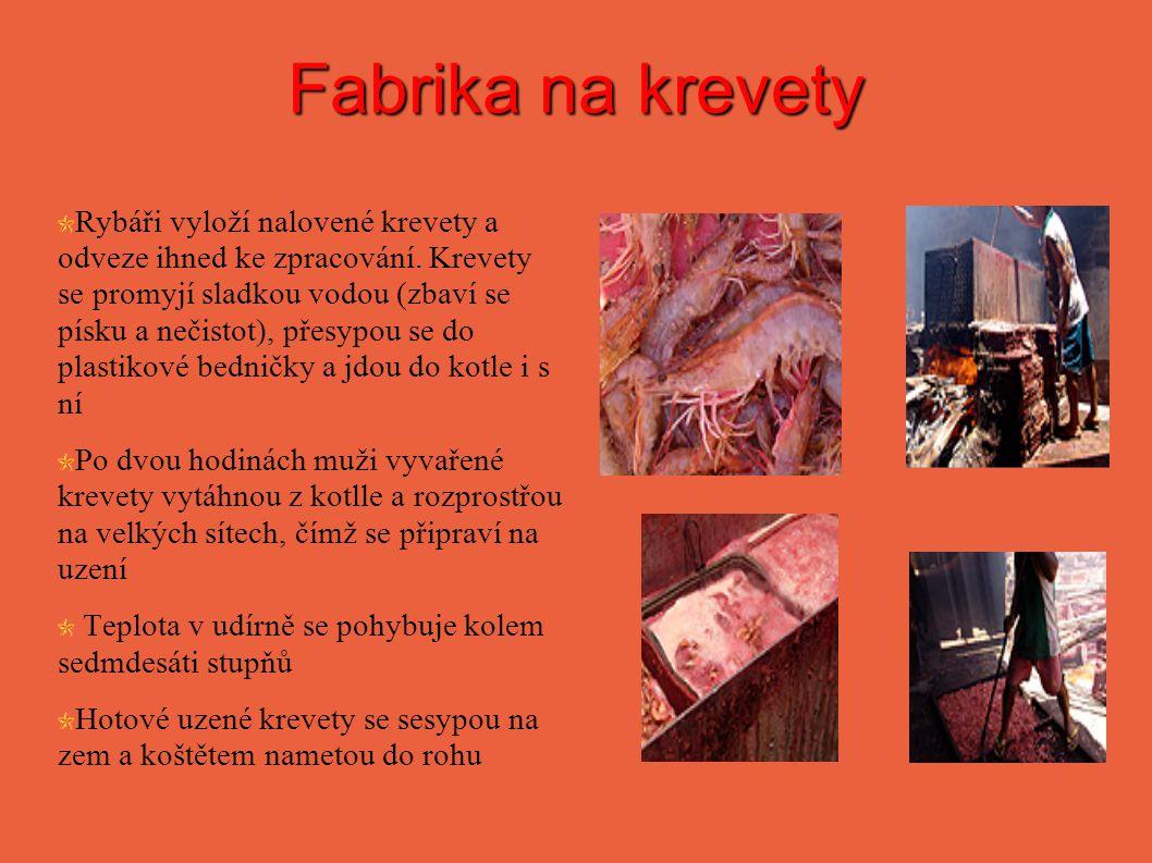 Fabrika na krevety Rybáři vyloží nalovené krevety a odveze ihned ke zpracování. Krevety se promyjí sladkou vodou (zbaví se písku a nečistot), přesypou