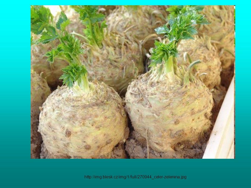 http://img.blesk.cz/img/1/full/270944_celer-zelenina.jpg