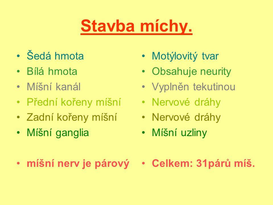 Obrázek stavby míchy. http://www.google.cz/imgres?q=m%C3%ADcha&hl=cs&biw=1024