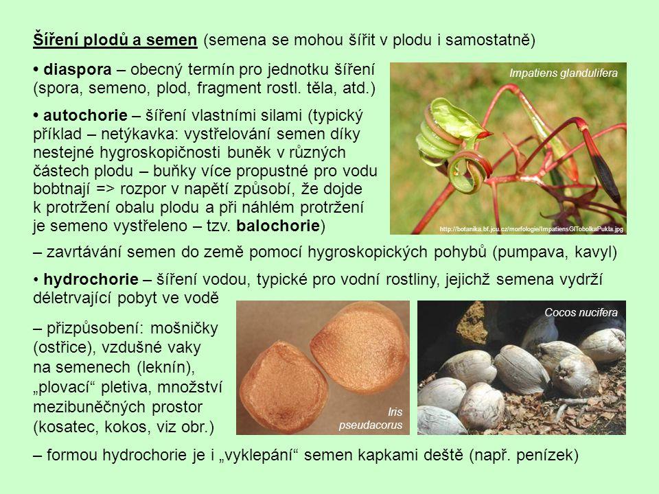 Šíření plodů a semen (semena se mohou šířit v plodu i samostatně) – zavrtávání semen do země pomocí hygroskopických pohybů (pumpava, kavyl) hydrochori