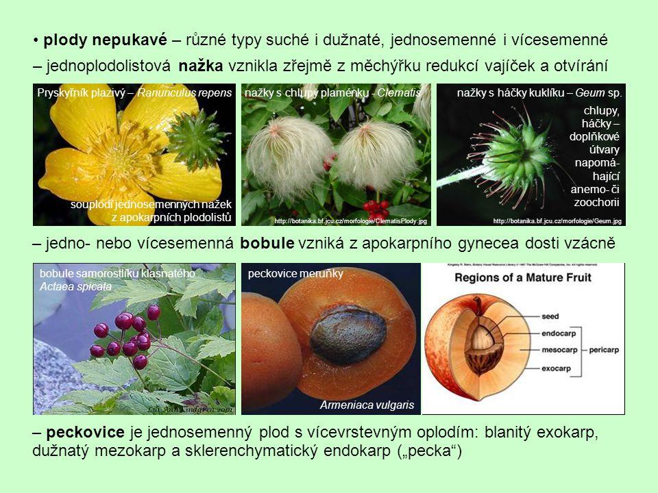 plody nepukavé – různé typy suché i dužnaté, jednosemenné i vícesemenné – jednoplodolistová nažka vznikla zřejmě z měchýřku redukcí vajíček a otvírání