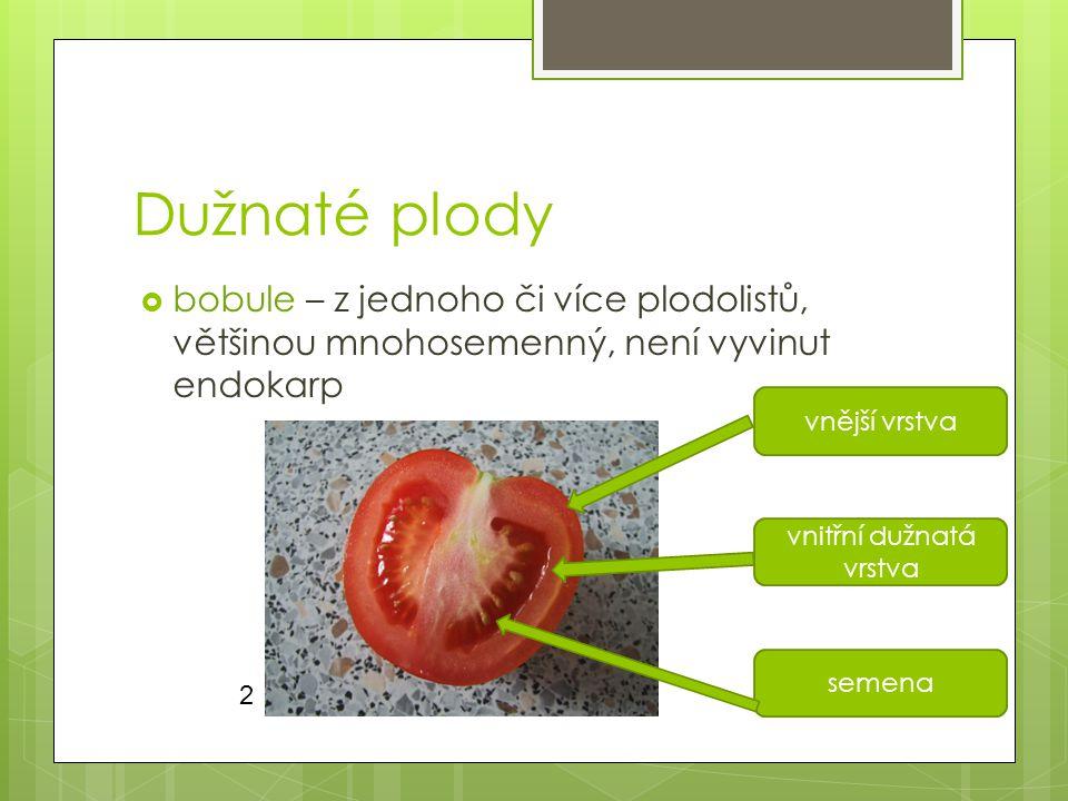 Dužnaté plody  bobule – z jednoho či více plodolistů, většinou mnohosemenný, není vyvinut endokarp vnější vrstva vnitřní dužnatá vrstva semena 2
