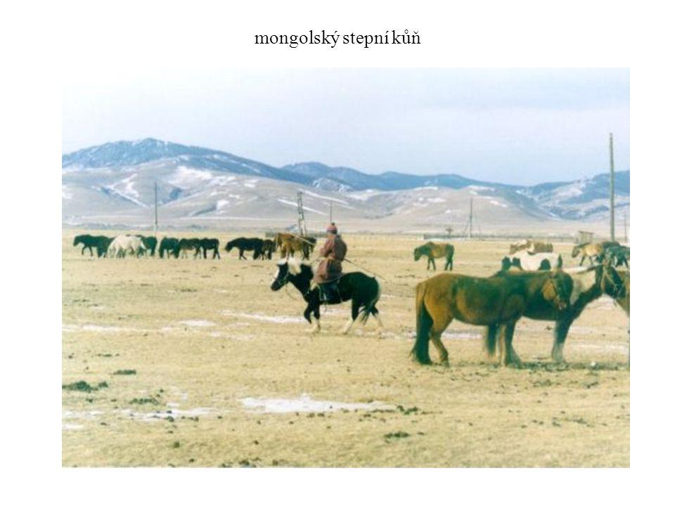 mongolský stepní kůň