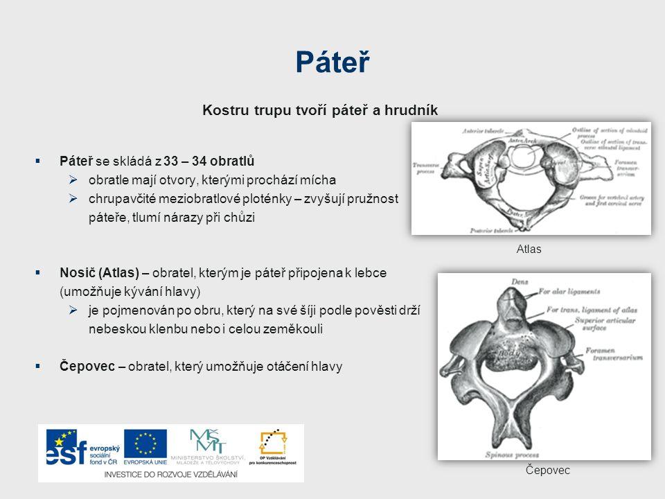 Páteř  Páteř se skládá z 33 – 34 obratlů  obratle mají otvory, kterými prochází mícha  chrupavčité meziobratlové ploténky – zvyšují pružnost páteře