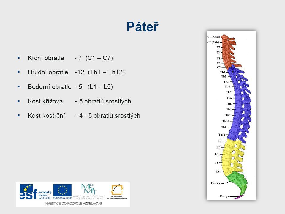 Hrudník (Thorax) Hrudník:  tvoří – dutinu hrudní  chrání srdce a plíce  je pohyblivý a pružný (chrupavčité spojení) – důležité pro dýchání Skladba hrudníku:  kost hrudní  12 párů žeber : - 7 párů žeber pravých (připojených k hrudní kosti) - 3 páry žeber nepravých ( připojených chrupavkou k 7.žebru) - 2 páry žeber volných (připojena k hrudní páteři)