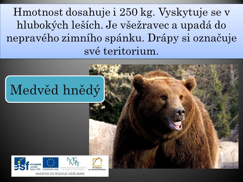 Hmotnost dosahuje i 250 kg. Vyskytuje se v hlubokých leších. Je všežravec a upadá do nepravého zimního spánku. Drápy si označuje své teritorium. Medvě