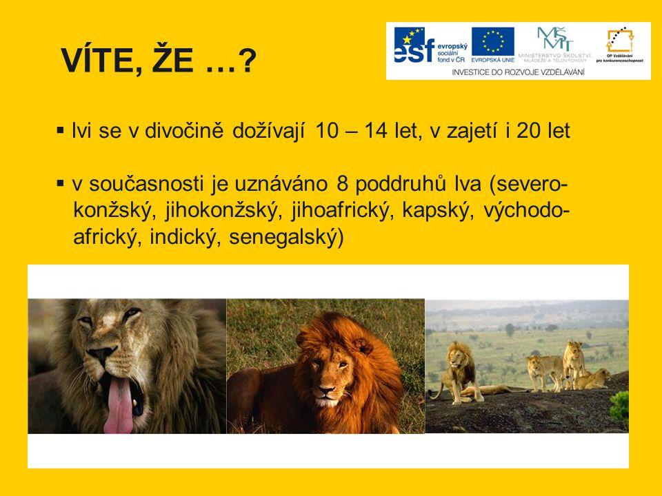 VÍTE, ŽE …?  lvi se v divočině dožívají 10 – 14 let, v zajetí i 20 let  v současnosti je uznáváno 8 poddruhů lva (severo- konžský, jihokonžský, jiho