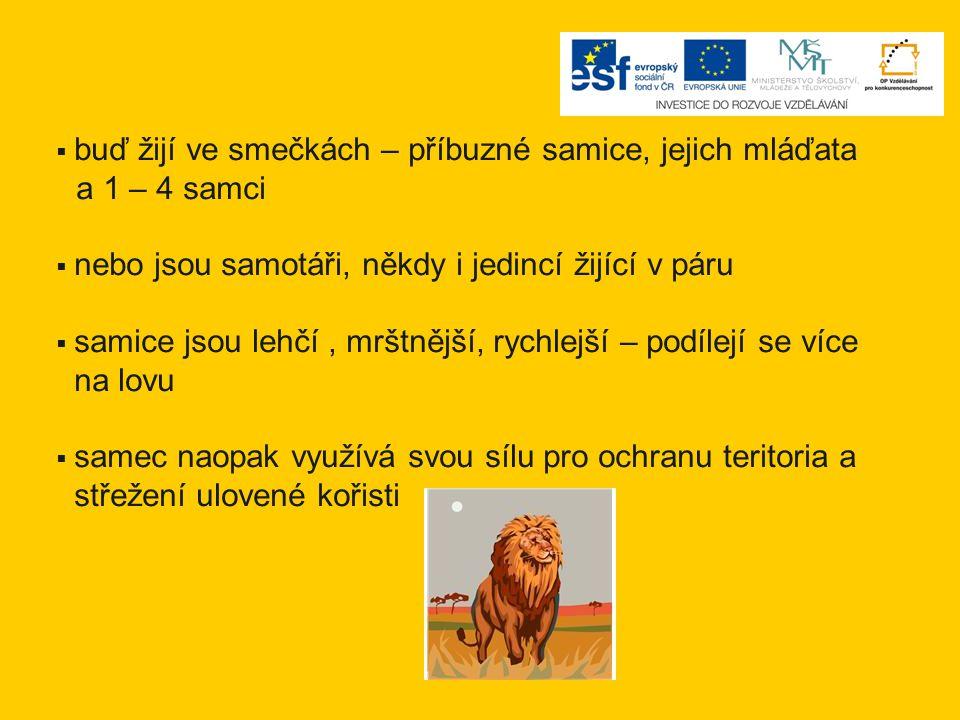 Dříve se lvi volně vyskytovali v Africe a v Asii.