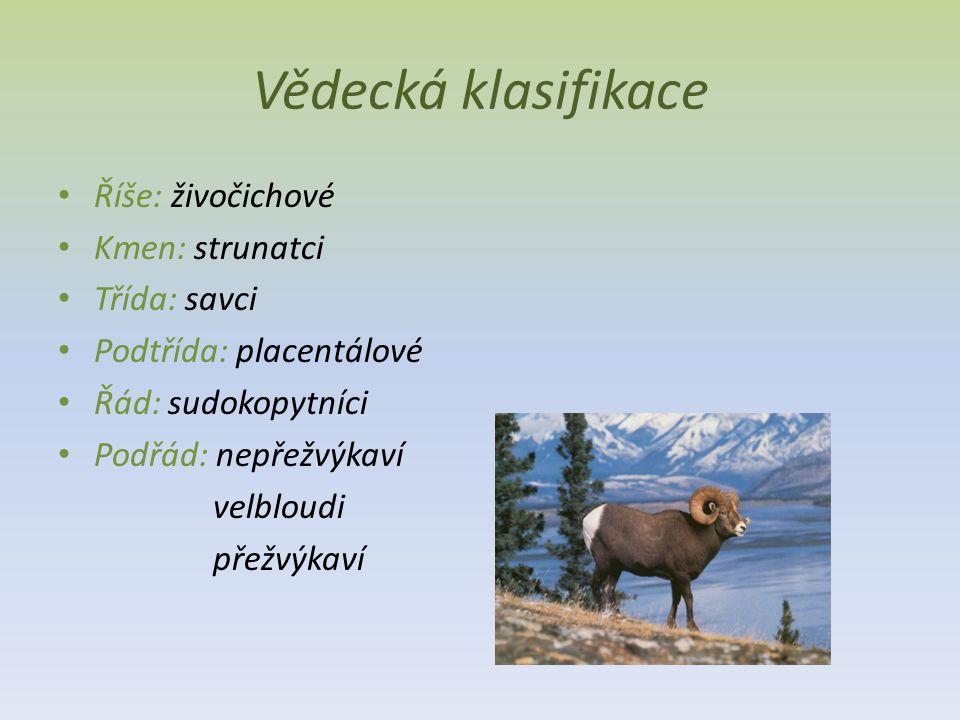 Vědecká klasifikace Říše: živočichové Kmen: strunatci Třída: savci Podtřída: placentálové Řád: sudokopytníci Podřád: nepřežvýkaví velbloudi přežvýkaví