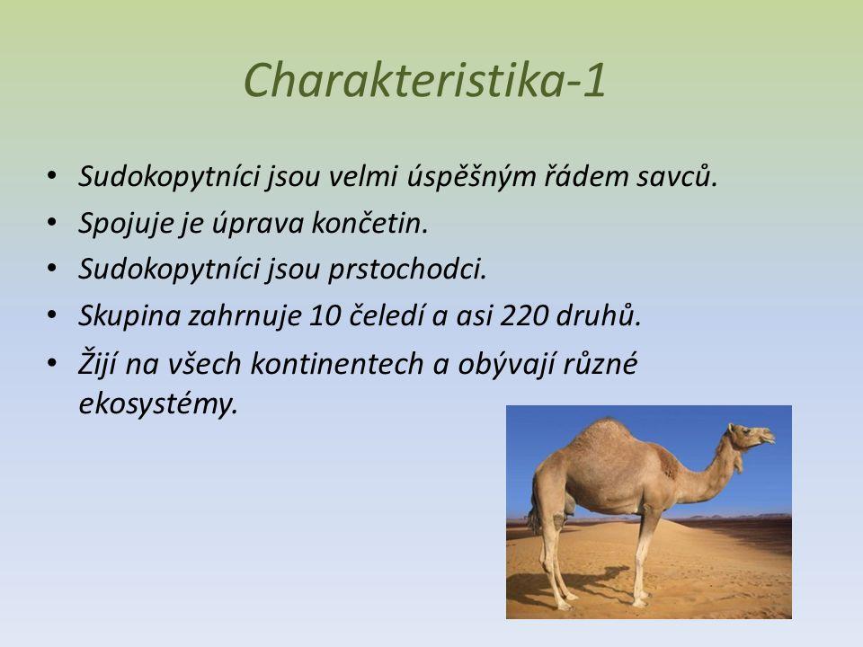 Charakteristika-1 Sudokopytníci jsou velmi úspěšným řádem savců.