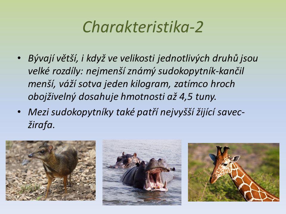 Charakteristika-2 Bývají větší, i když ve velikosti jednotlivých druhů jsou velké rozdíly: nejmenší známý sudokopytník-kančil menší, váží sotva jeden kilogram, zatímco hroch obojživelný dosahuje hmotnosti až 4,5 tuny.