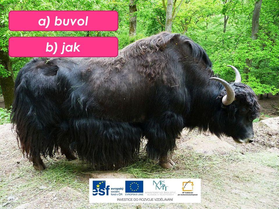 b) jak a) buvol