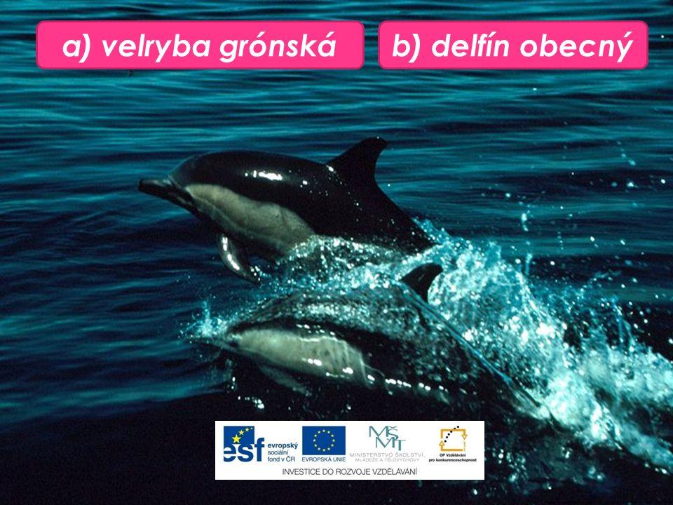 b) delfín obecnýa) velryba grónská