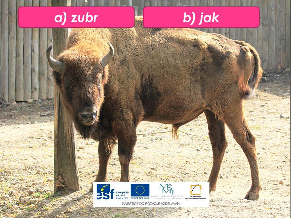 a) zubrb) jak