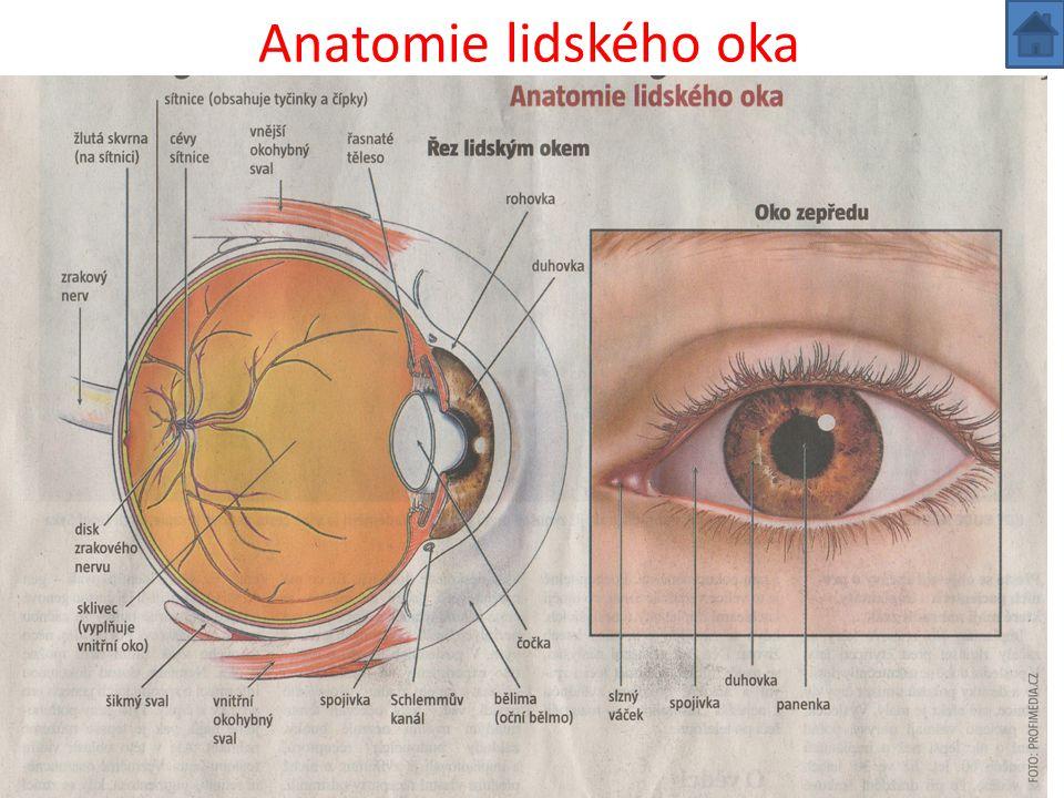 Oční vady v každém věku Zrak je nejdůležitějším smyslem člověka.