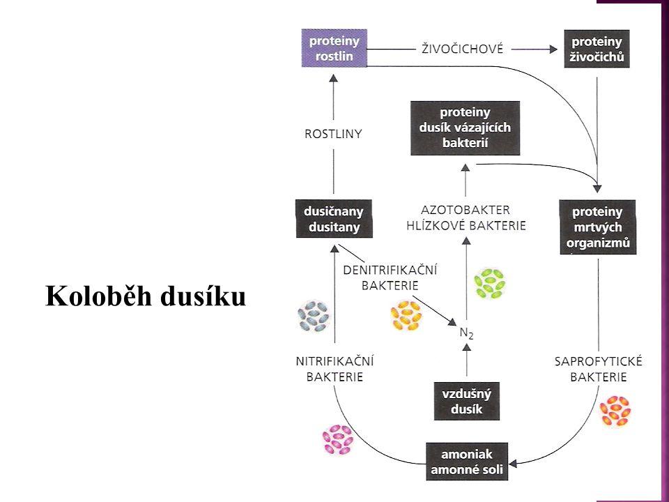  Existuje v různých alotropických modifikacích, jež se liší reaktivitou.