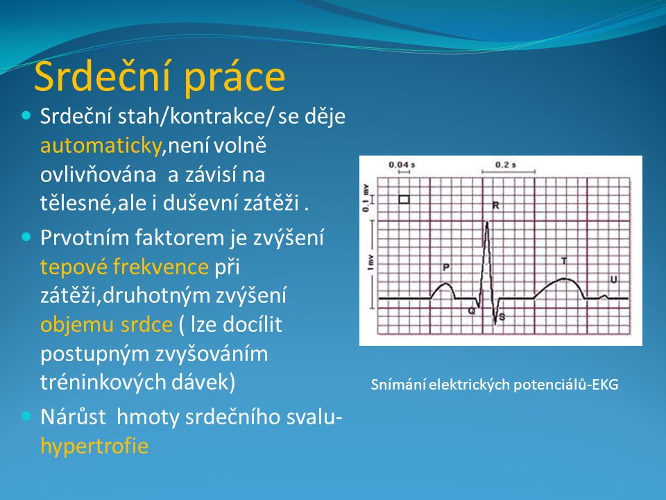 Srdeční práce Srdeční stah/kontrakce/ se děje automaticky,není volně ovlivňována a závisí na tělesné,ale i duševní zátěži. Prvotním faktorem je zvýšen