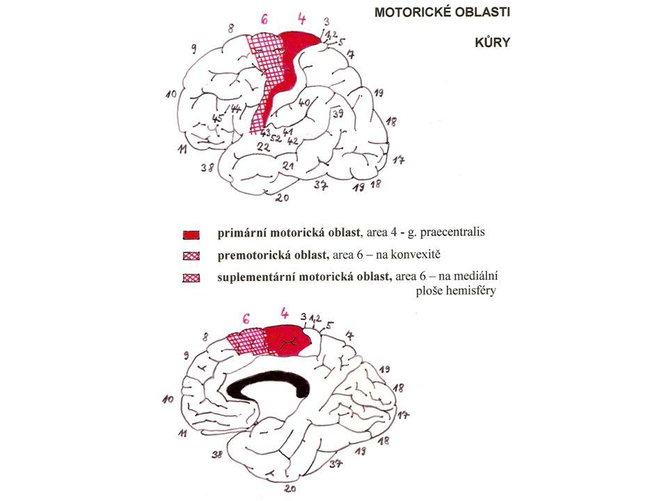 Motorické oblasti kůry: primární motorická oblast, area 4, g.