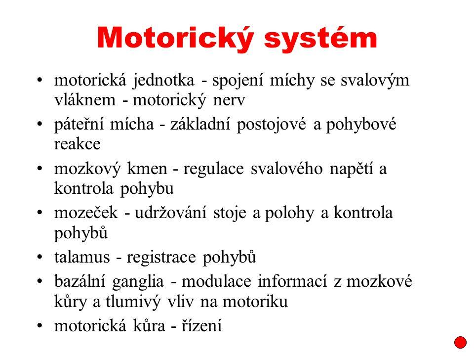 Motorický systém motorická jednotka - spojení míchy se svalovým vláknem - motorický nerv páteřní mícha - základní postojové a pohybové reakce mozkový