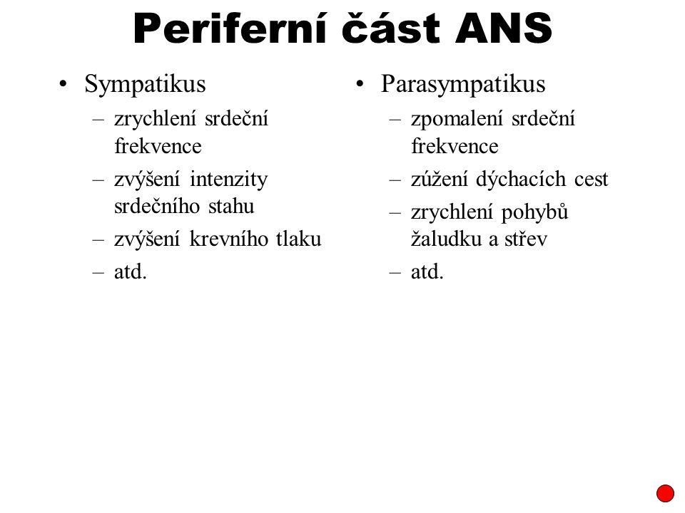 Periferní část ANS Sympatikus –zrychlení srdeční frekvence –zvýšení intenzity srdečního stahu –zvýšení krevního tlaku –atd. Parasympatikus –zpomalení