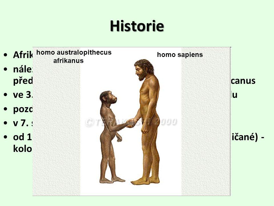 Historie Afrika - kolébka lidstva nález nejstarších kosterních pozůstatků přímého předchůdce člověka – homo australopithecus africanus ve 3.
