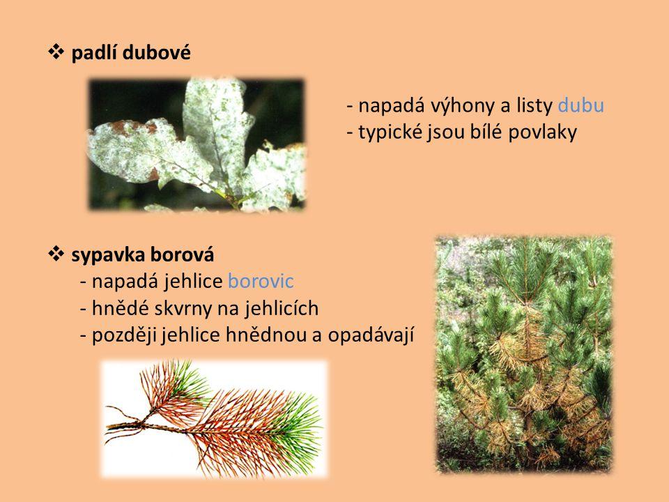  padlí dubové  sypavka borová - napadá jehlice borovic - hnědé skvrny na jehlicích - později jehlice hnědnou a opadávají - napadá výhony a listy dub