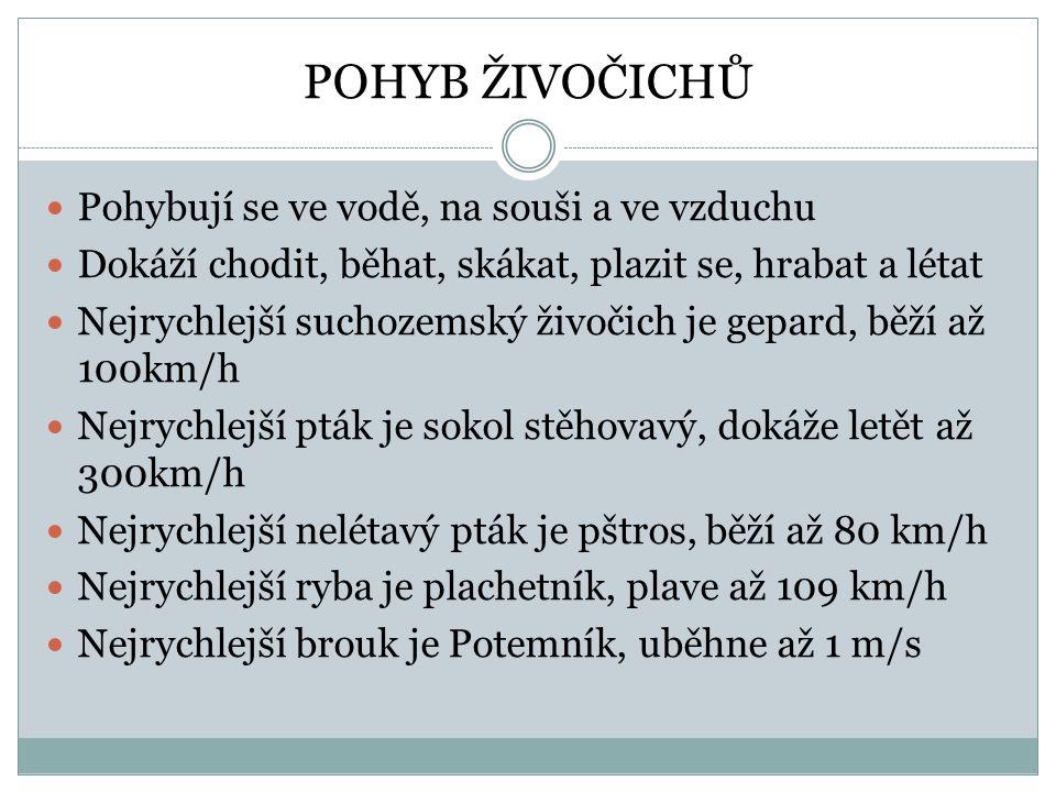 POHYB ŽIVOČICHŮ Pohybují se ve vodě, na souši a ve vzduchu Dokáží chodit, běhat, skákat, plazit se, hrabat a létat Nejrychlejší suchozemský živočich j
