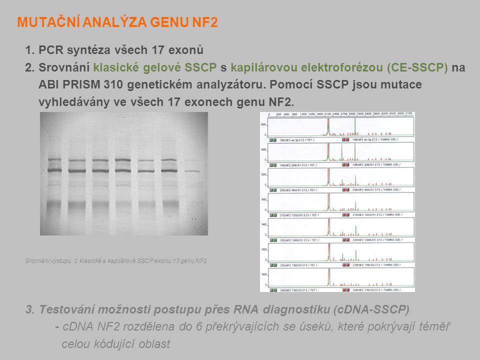 MUTAČNÍ ANALÝZA GENU NF2 1. PCR syntéza všech 17 exonů 2. Srovnání klasické gelové SSCP s kapilárovou elektroforézou (CE-SSCP) na ABI PRISM 310 geneti