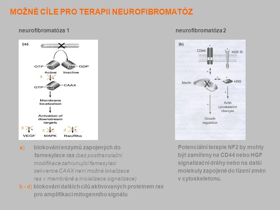 MOŽNÉ CÍLE PRO TERAPII NEUROFIBROMATÓZ neurofibromatóza 1 neurofibromatóza 2 a) blokování enzymů zapojených do farnesylace ras (bez posttranslační mod