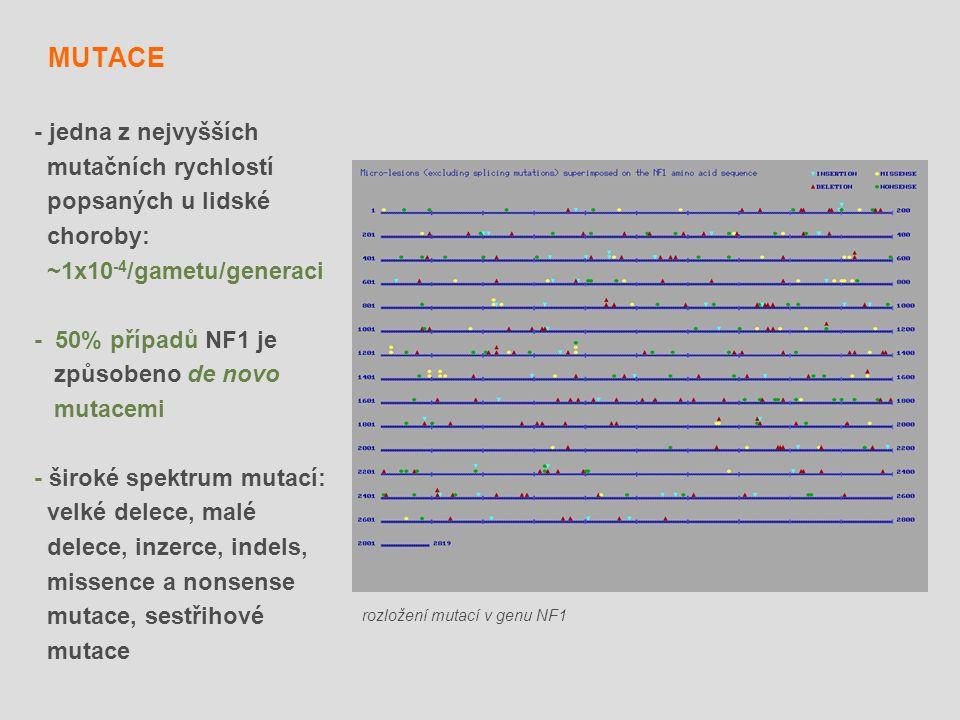 MUTACE - jedna z nejvyšších mutačních rychlostí popsaných u lidské choroby: ~1x10 -4 /gametu/generaci - 50% případů NF1 je způsobeno de novo mutacemi