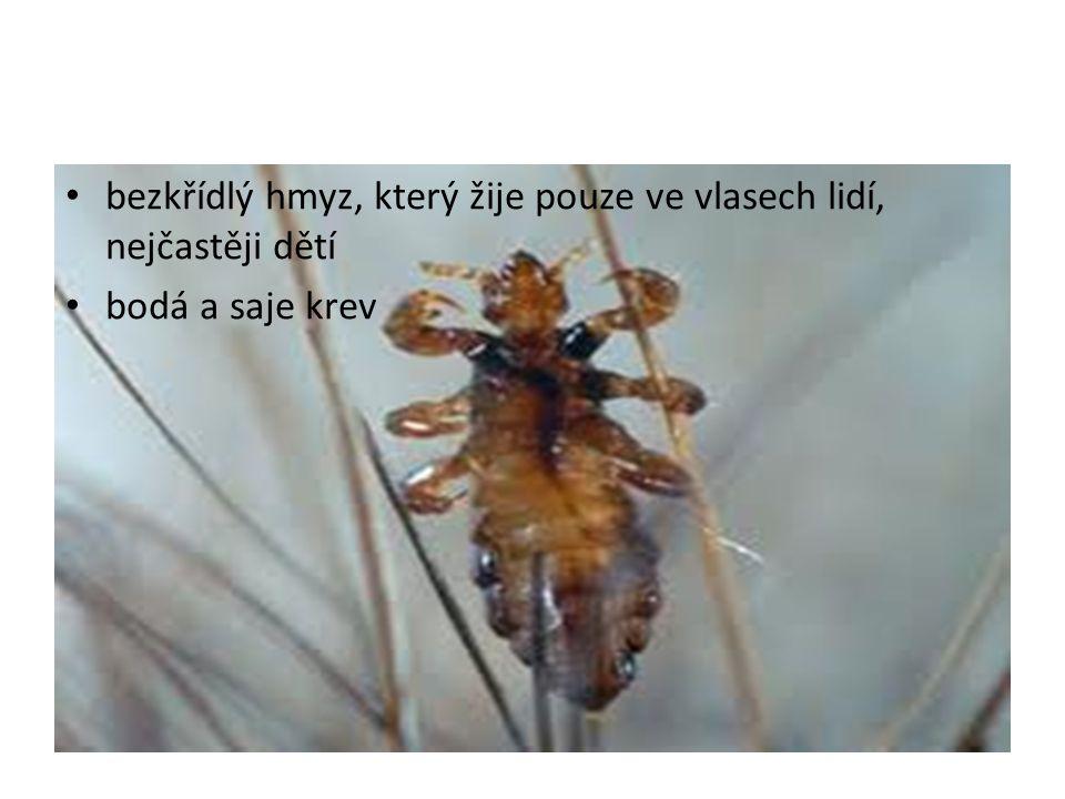 bezkřídlý hmyz, který žije pouze ve vlasech lidí, nejčastěji dětí bodá a saje krev