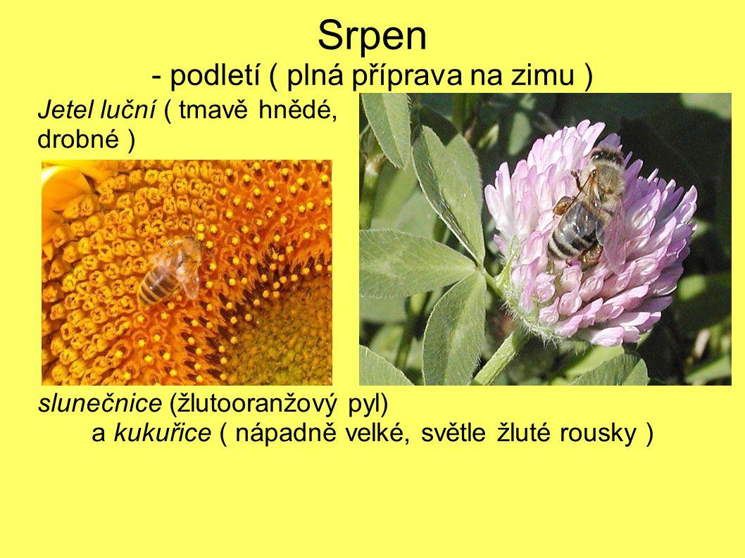 Srpen - podletí ( plná příprava na zimu ) Jetel luční ( tmavě hnědé, drobné ) slunečnice (žlutooranžový pyl) a kukuřice ( nápadně velké, světle žluté