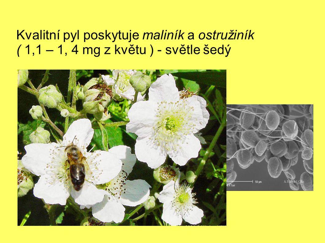 Kvalitní pyl poskytuje maliník a ostružiník ( 1,1 – 1, 4 mg z květu ) - světle šedý