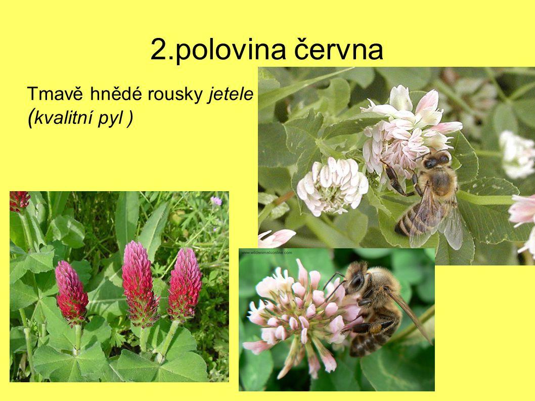 2.polovina června Tmavě hnědé rousky jetele ( kvalitní pyl )
