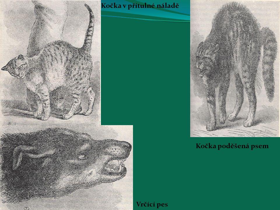 Kočka v přítulné náladě Kočka poděšená psem Vrčící pes