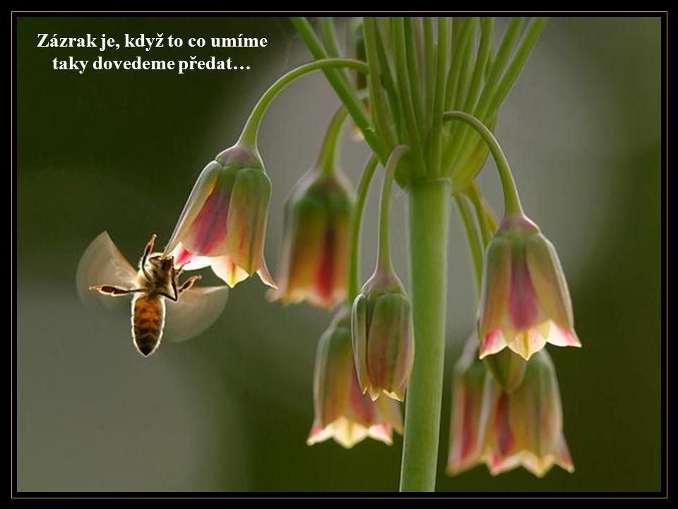 Zázrak je, když krásu vidíme i v tom, co se zdánlivě krásné nejeví…