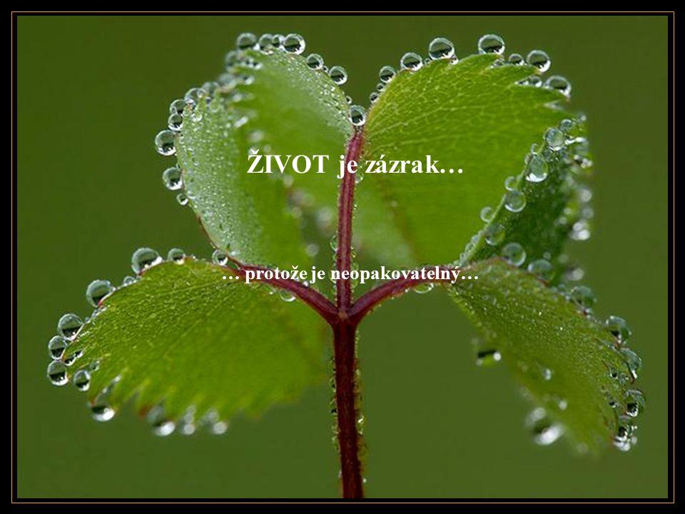 Zázrak je, když držíme štěstí tak, že ho nepomačkáme…