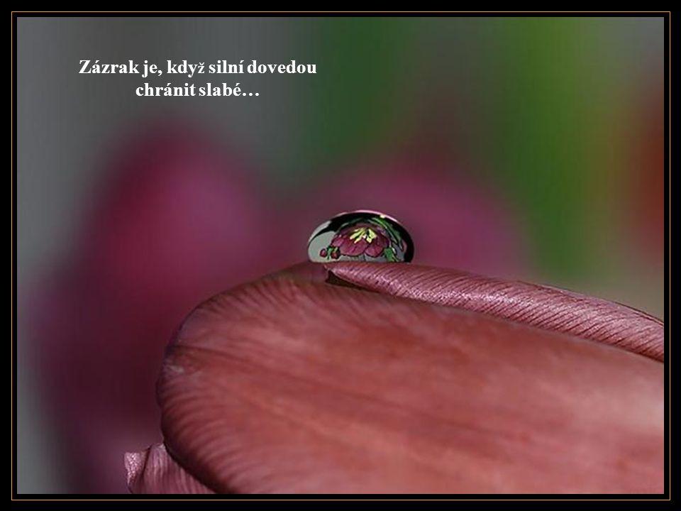 Zázrak je, kdy ž ž ijeme se zásadami, které necítíme jako okovy…