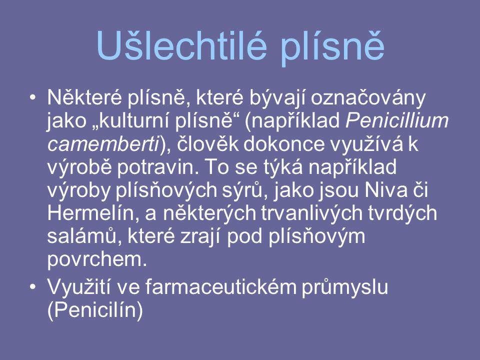 """Ušlechtilé plísně Některé plísně, které bývají označovány jako """"kulturní plísně"""" (například Penicillium camemberti), člověk dokonce využívá k výrobě p"""