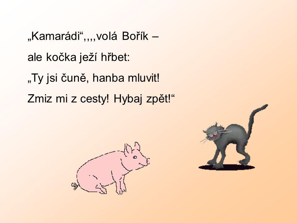 """""""Kamarádi"""",,,,volá Bořík – ale kočka ježí hřbet: """"Ty jsi čuně, hanba mluvit! Zmiz mi z cesty! Hybaj zpět!"""""""
