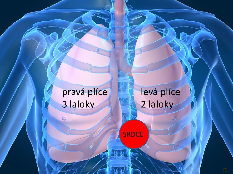 Vdech – aktivní děj (činnost dýchacích svalů) Výdech – pasivní děj (svaly ochabnou) Při normálním vdechu a výdechu se v plicích vymění asi 0,5 l vzduchu Počet vdechů za minutu: asi 16 Minutový dechový objem: ……………………… Vitální kapacita plic (výměna vzduchu v plicích při max.