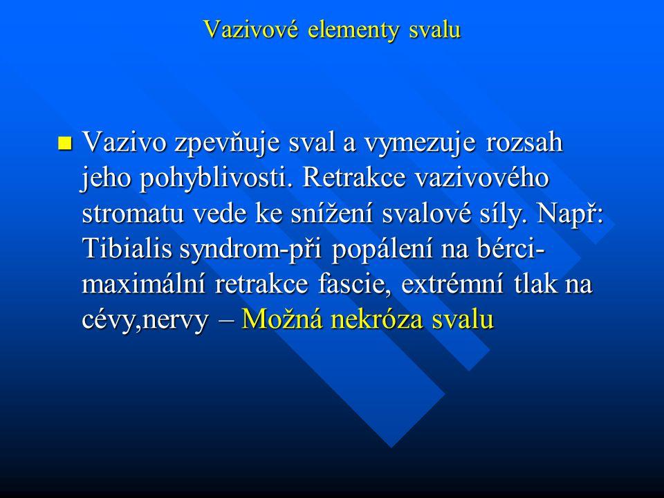 Vazivové elementy svalu Vazivo zpevňuje sval a vymezuje rozsah jeho pohyblivosti. Retrakce vazivového stromatu vede ke snížení svalové síly. Např: Tib