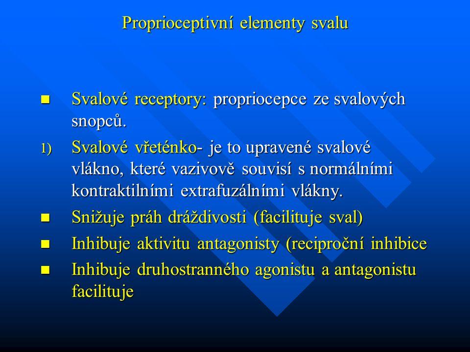 Proprioceptivní elementy svalu Svalové receptory: propriocepce ze svalových snopců. Svalové receptory: propriocepce ze svalových snopců. 1) Svalové vř