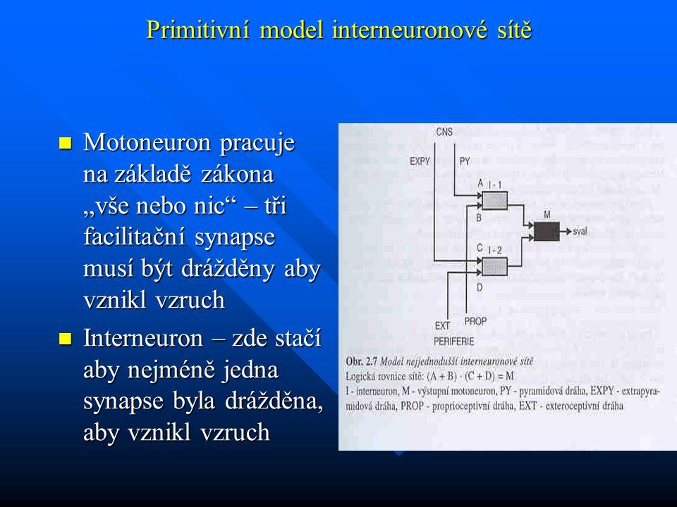 """Primitivní model interneuronové sítě Motoneuron pracuje na základě zákona """"vše nebo nic – tři facilitační synapse musí být drážděny aby vznikl vzruch Motoneuron pracuje na základě zákona """"vše nebo nic – tři facilitační synapse musí být drážděny aby vznikl vzruch Interneuron – zde stačí aby nejméně jedna synapse byla drážděna, aby vznikl vzruch Interneuron – zde stačí aby nejméně jedna synapse byla drážděna, aby vznikl vzruch"""