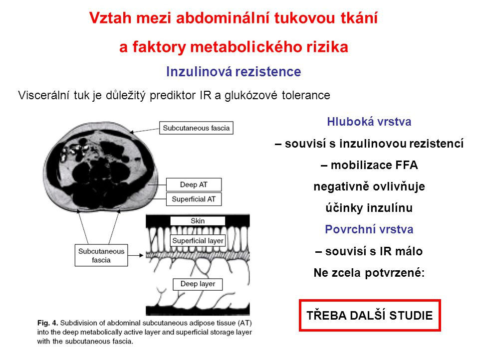 Vztah mezi abdominální tukovou tkání a faktory metabolického rizika Inzulinová rezistence Viscerální tuk je důležitý prediktor IR a glukózové toleranc