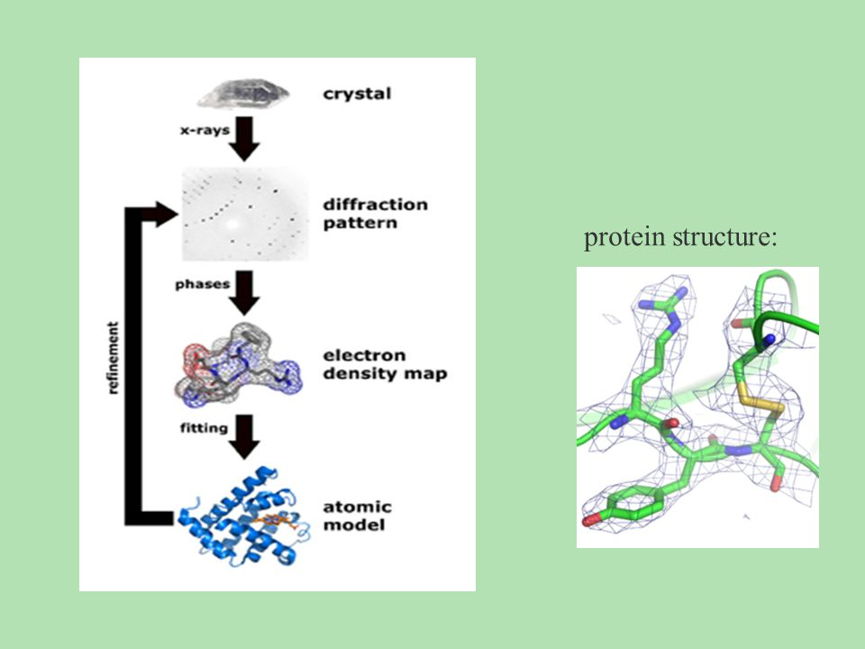 protein structure: