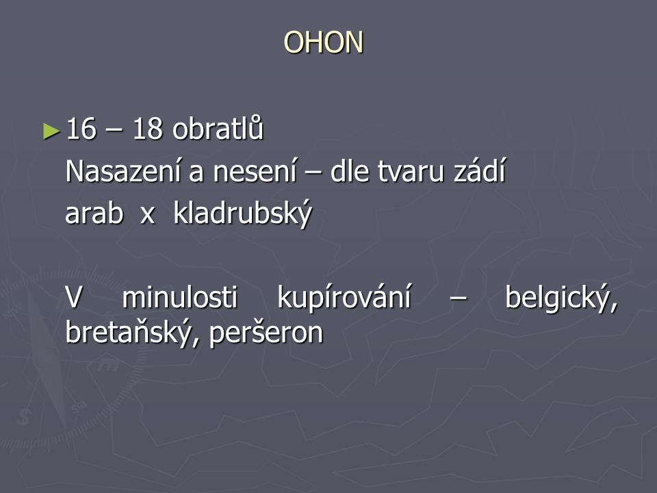 OHON ► 16 – 18 obratlů Nasazení a nesení – dle tvaru zádí Nasazení a nesení – dle tvaru zádí arab x kladrubský V minulosti kupírování – belgický, bret