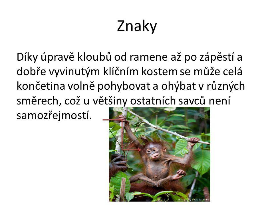 Znaky Dalším významným znakem primátů je vysoce rozvinutý mozek.