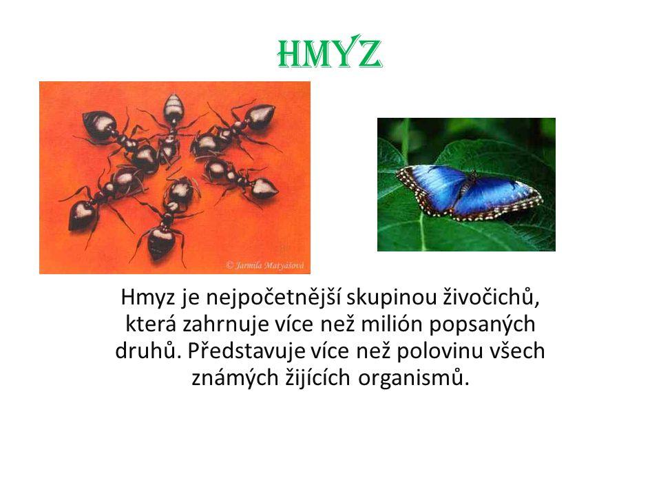 Hmyz Hmyz je nejpočetnější skupinou živočichů, která zahrnuje více než milión popsaných druhů. Představuje více než polovinu všech známých žijících or