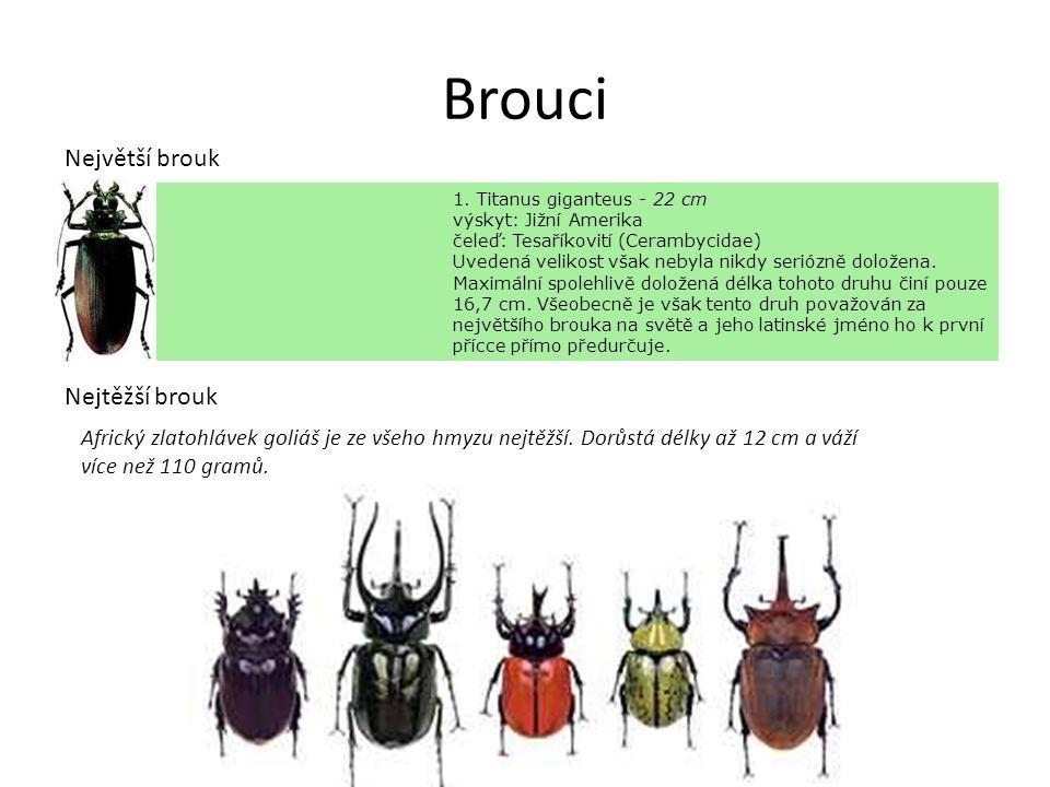 Brouci 1. Titanus giganteus - 22 cm výskyt: Jižní Amerika čeleď: Tesaříkovití (Cerambycidae) Uvedená velikost však nebyla nikdy seriózně doložena. Max